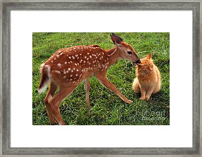 Fawn And Friend Framed Print