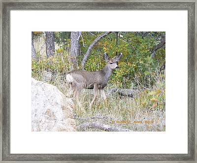 Framed Print featuring the photograph Fawn by Deborah Moen