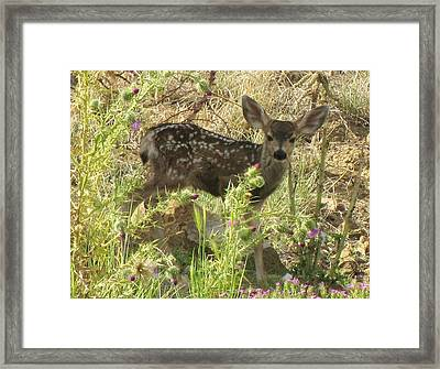 Fawn In Thistles Framed Print by Feva  Fotos