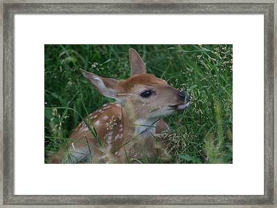 Fawn In Weeds Framed Print