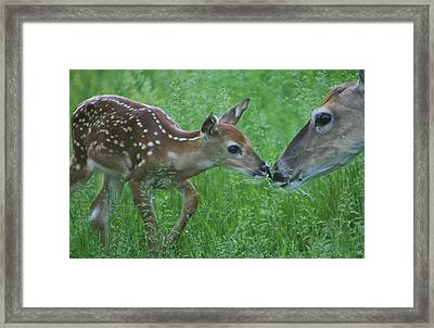 Fawn Kiss Framed Print