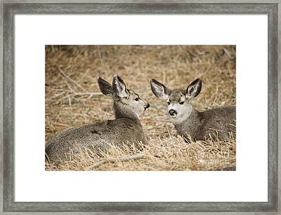 Fawns At Rest Framed Print by Bob Dowling