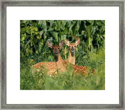 Fawns Crossed Framed Print
