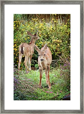 Framed Print featuring the photograph Fawns Eating Flowers by Peggy Collins