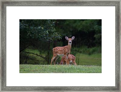 Fawns Framed Print by Greg Vizzi