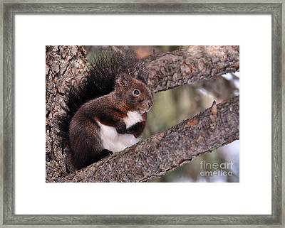 Fearful Framed Print