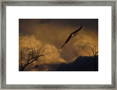 Fearless Eagle Framed Print by Frank Wilson
