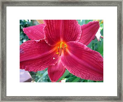 Fearless Framed Print by Mike Podhorzer