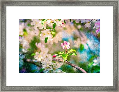 Feast Of Life 11 Framed Print