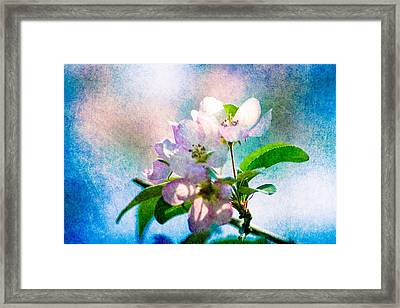 Feast Of Life 17 - All The Lights And Colors Of Love Framed Print by Alexander Senin
