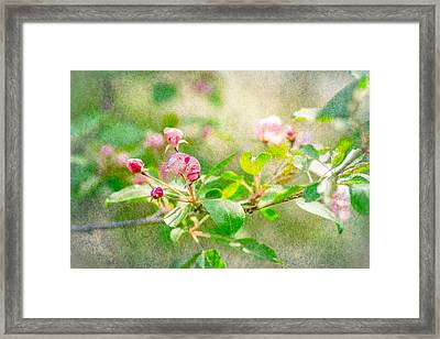 Feast Of Life 20 - Morning Mists Framed Print