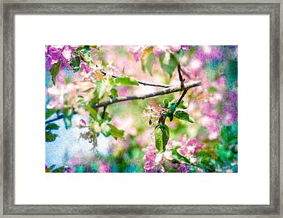 Feast Of Life 22 - Apple - The Beginning Framed Print