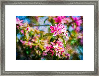 Feast Of Life 3 Framed Print