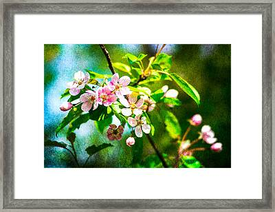 Feast Of Life 8 Framed Print