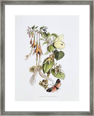 Feasting And Fun Among The Fuschias Framed Print