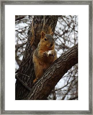 Feasting On Fish Fox Squirrel Framed Print by Sara  Raber