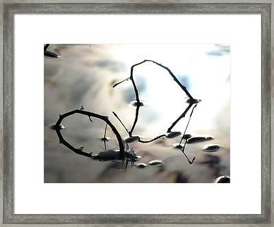 Feather And Branches Framed Print