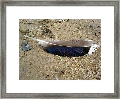 Feather And Inchworm Framed Print