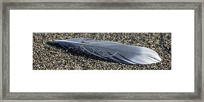Feather And Sand Framed Print