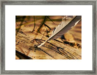 Feather And Sand Framed Print by Raimond Klavins