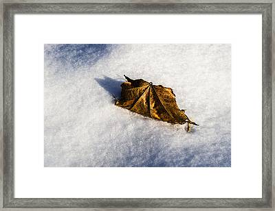Feather Bed Of Snow Framed Print