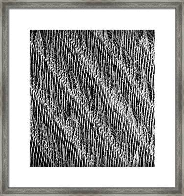 Feather Detail Framed Print