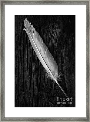 Feather Framed Print by Edward Fielding