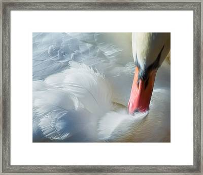 Feather Flufifng Framed Print by Joan Herwig