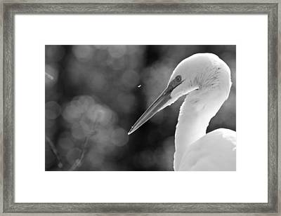 Feather Fly Away Framed Print