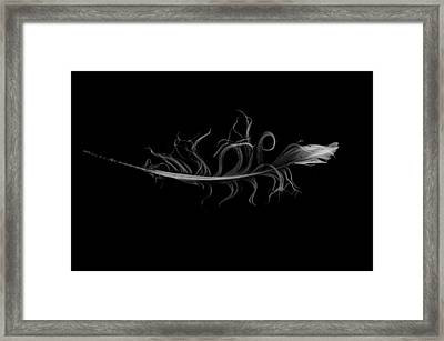 feather II Framed Print