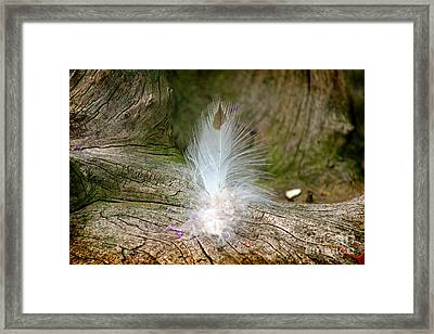 Feather Framed Print by Karen Adams