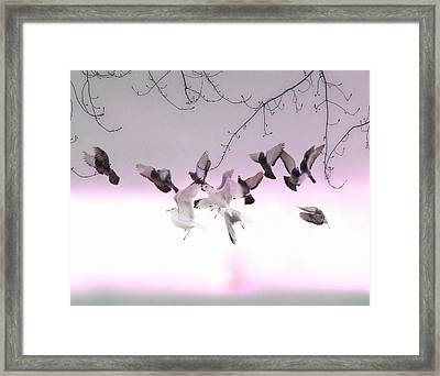 Feather Light Framed Print