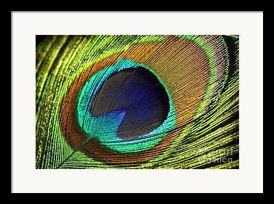 Fed Digital Art Framed Prints