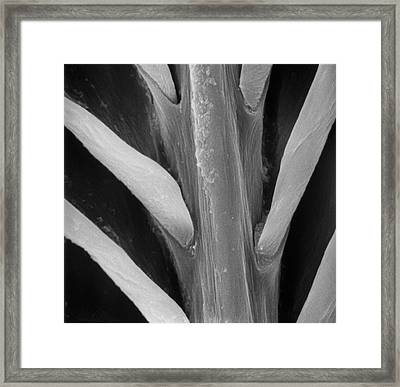 Feather Framed Print by Natural History Museum, London