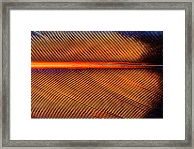 Feather Of A Flicker Framed Print