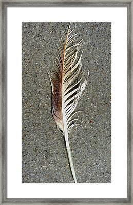 Feather On The Beach Framed Print by Patricia Januszkiewicz