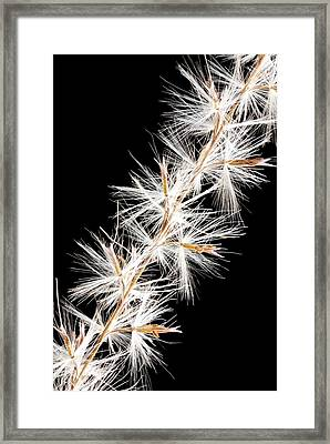 Feather Reed Grass Framed Print by Jim Hughes