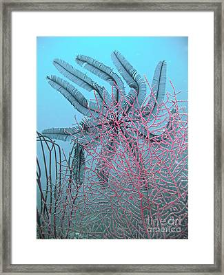 Feather Star Dancer Framed Print
