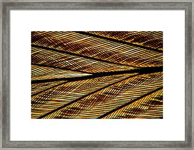 Feather Vane Framed Print