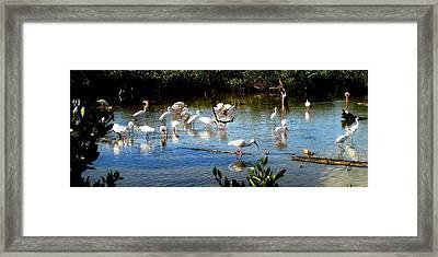 Feathered Coastal Society Framed Print by Will Boutin Photos