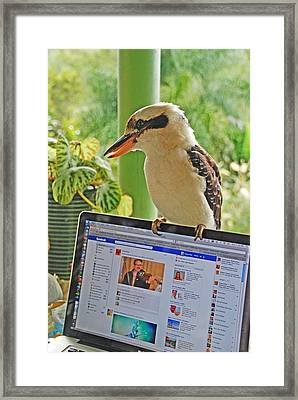 Feathered Facebook Fan Framed Print