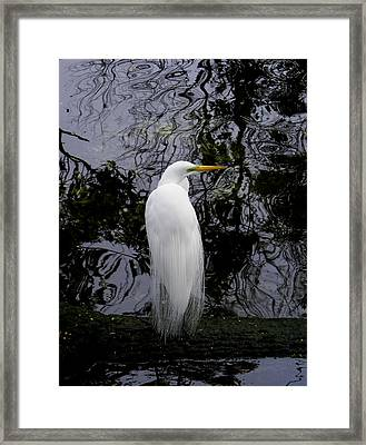 Feathered Fantasy Framed Print