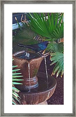 Feathered Fountain  Framed Print
