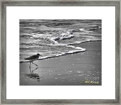 Feathered Friend At The Beach Framed Print