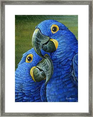 Feathered Friend Framed Print by Cara Bevan