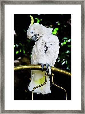 Feathered Friend Framed Print by Christi Kraft
