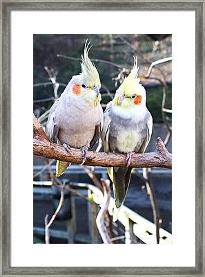 Feathered Friends Framed Print by Lynnette Johns
