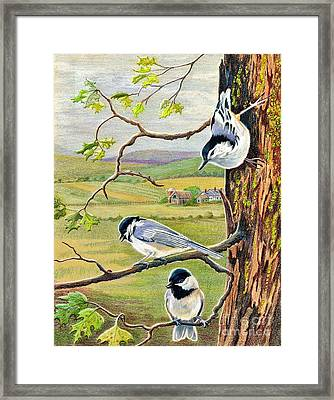 Feathered Friends Framed Print by Marilyn Smith