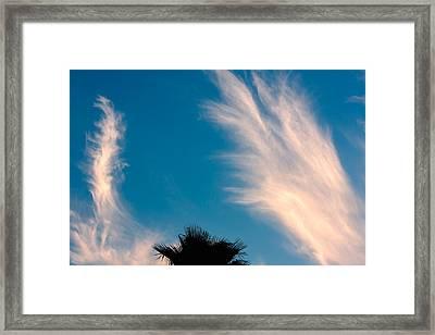 Feathered Horns Framed Print