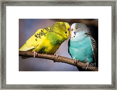 Feathered Love Framed Print by Caisues Photography